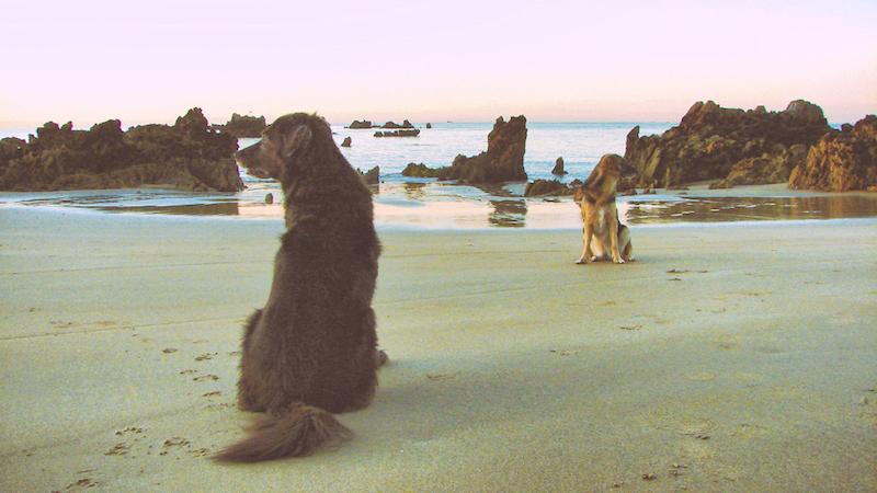 Reisen und Campen mit Hund in Spanien