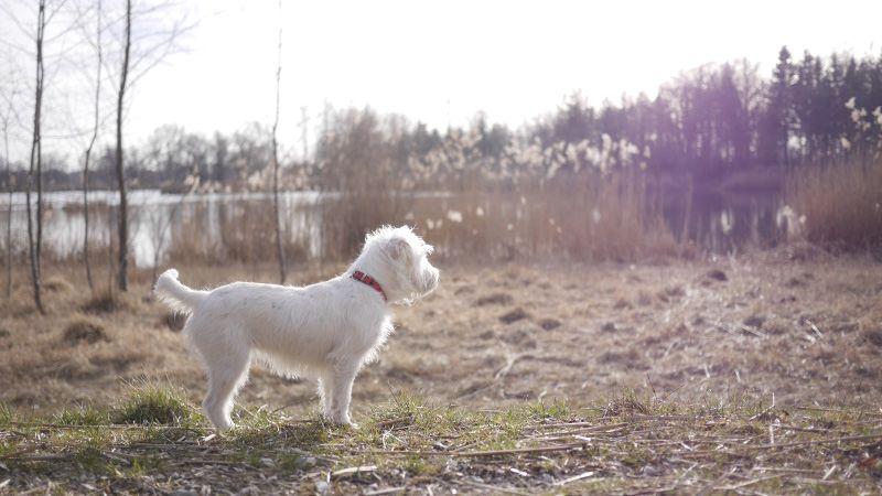 Reisen Mit Hund Und Katze: Erste-Hilfe-Tipps Für Verletzungen, Durchfall & Co.
