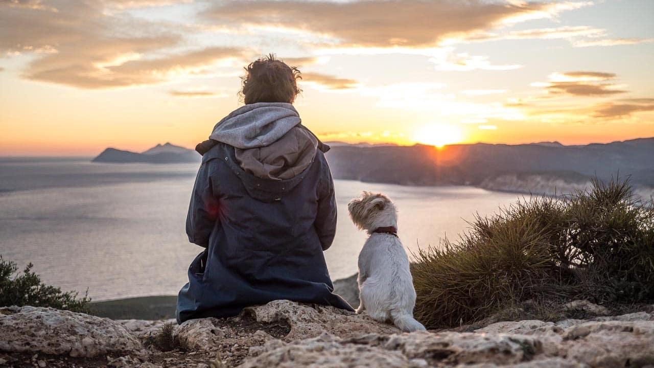 Checkliste für Reisen und Camping mit Hund